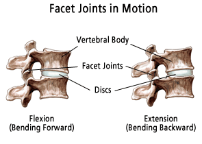 Facet Joints In Motion