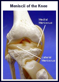 Knee Meniscus